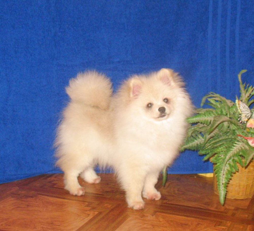 Can A Minor Register A Dog With Akc