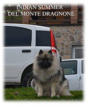 Indian Summer Del Monte Dragnone