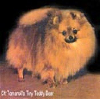 Tomanoll's Tiny Teddy Bear