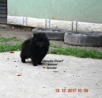Rebecca Minkoff Danube  Dwarf
