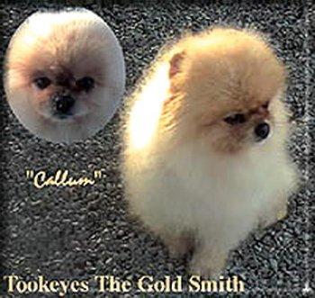 Tookeyes The Gold Smith