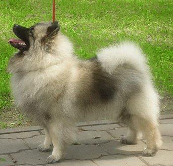 Schone Hund Blondi