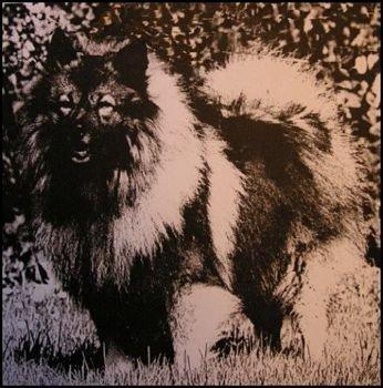 Aski Von Der Wolfshohe
