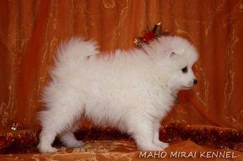 Махо Мирай Хироши