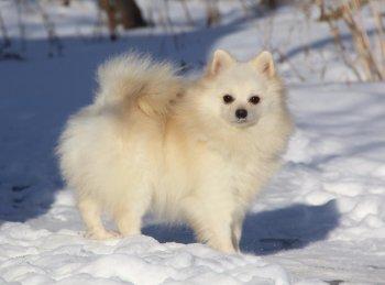 Танцующая В Вихре Снежинок