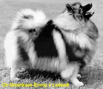 Greenkees Envoy V Ledwell