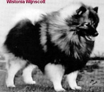 Wistonia Wynscott