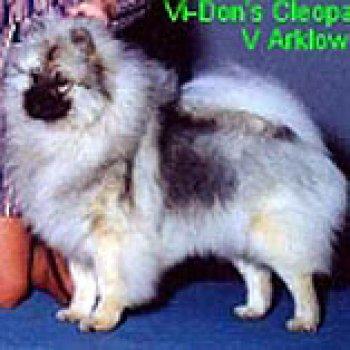 Vi Don's Cleopatra Arklow's