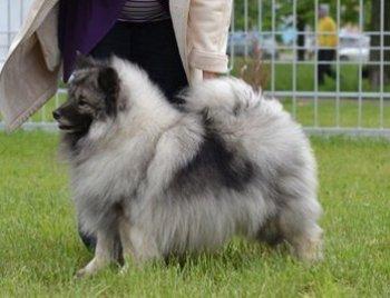 Schone Hund Dolche Vita