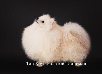 Тан Хоуп Золотой Талисман