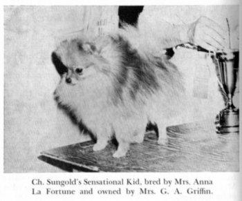 Sungold's Sensational Kid