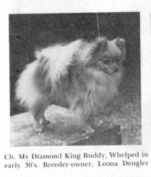 My Diamond King Of Buddy