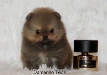 Дамерино Теос