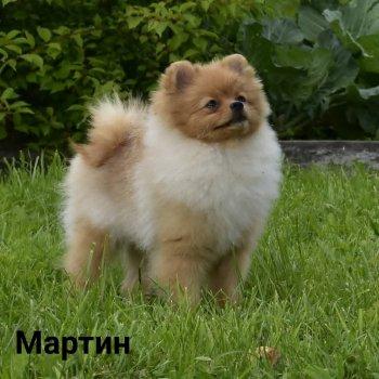 Лайт Оф Май Мартин