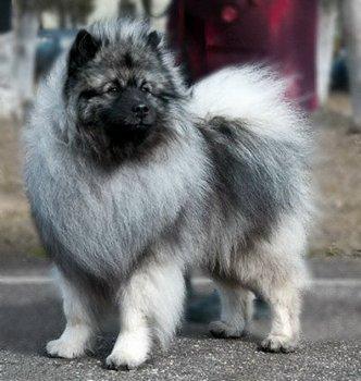 Schone Hund Pikasso
