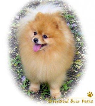 Puppy Love's Johannes