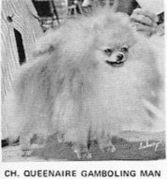 Queenaire Gamboling Man