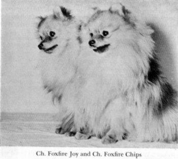 Foxfire Chips