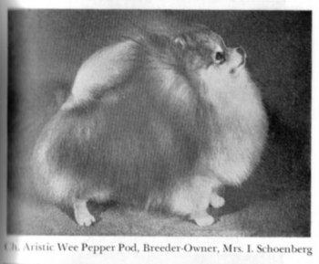 Aristic Wee Pepper Pod
