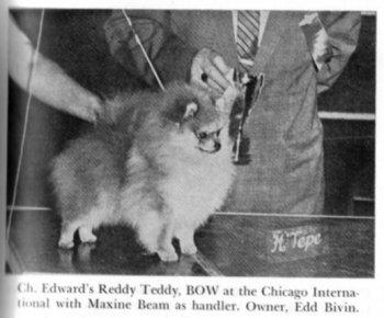 Edward's Reddy Teddy