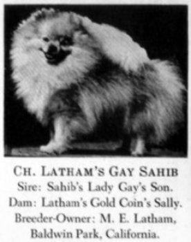 Latham's Gay Sahib