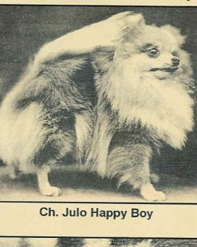 Julo Happy Boy