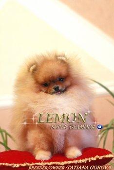 Super Glamour Lemon