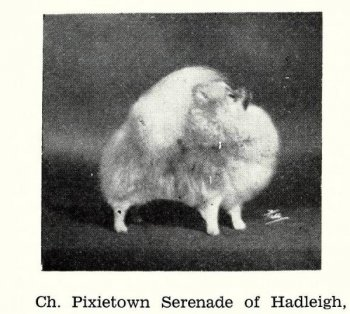 Pixietown Serenade Of Hadleigh