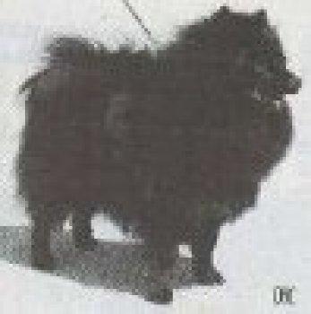 Viliten's Black Bozzi