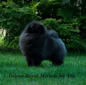 Dilina Royal Miracle For You