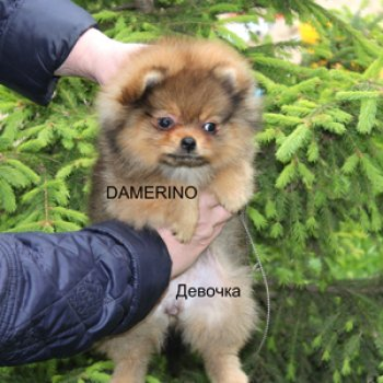 Damerino Tsara