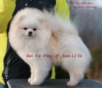 Bai Fu Ding Of Chiao Li Ya