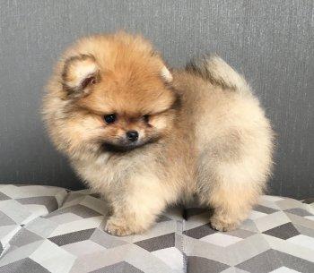 Gizmo A Cute Gremlin Mano Azartas