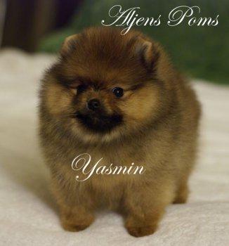Aljens Yasmin