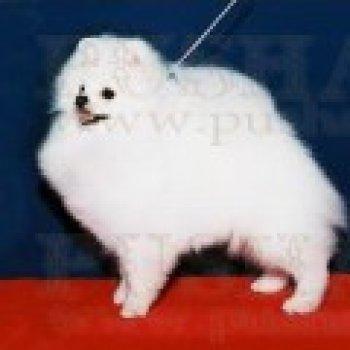 Super Bai Yio Te Of Chiao Li Ya