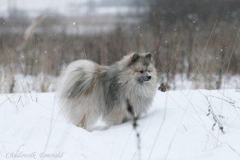 Чудо-Волк Эмеральд