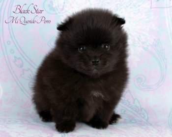 Black Star Mi Querido Perro