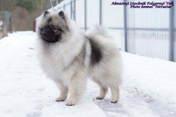 Алмазный Источник Полярный Волк