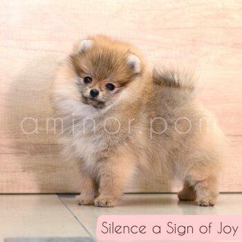 Silence A Sign Of Joy