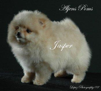 Aljens Twilight Jasper