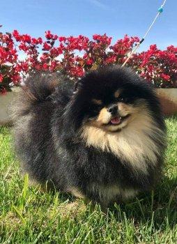 Summer-Dog Locko