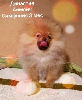 Династия Аймрич Симфония Успеха
