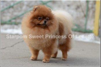 Starpom Sweet Princess Of Lenette