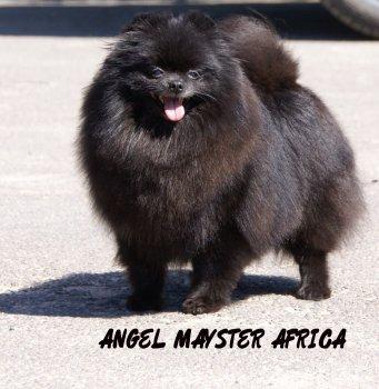 Ангел Майстер Африка