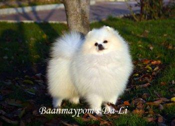 Baanmaypom's Da-Li