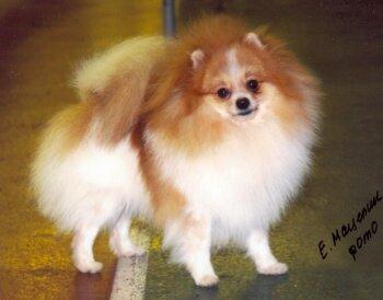 Doffo Of Kou Ju Tsai Pet Store