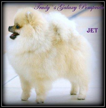 Trudy's Galaxy Pompride