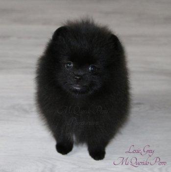 Lexie Grey Mi Querido Perro