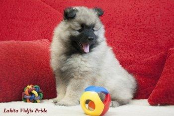 Lakita Vidjis Pride