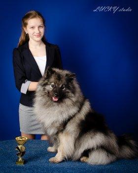 Schone Hund Tatta Knor
